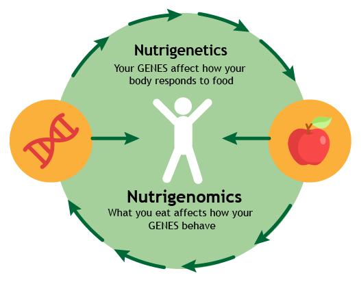 nutrigenetic-vs-nutrigenomics-illustration